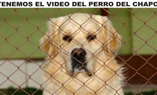 Exclusiva  del Notiloco, tenemos el video a donde dejo  su perro el chapo