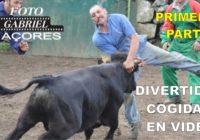 Divertidas cogidas de toros al estilo corralejas