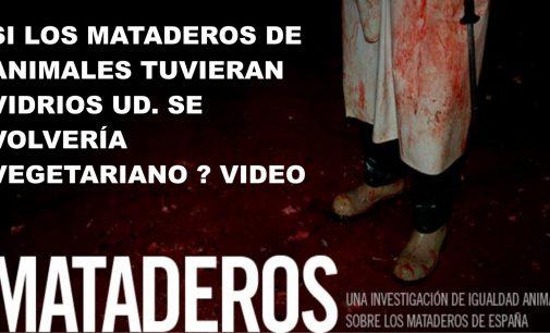 Los mataderos de animales tuvieran vidrios Ud. se volvería vegetariano VIDEO
