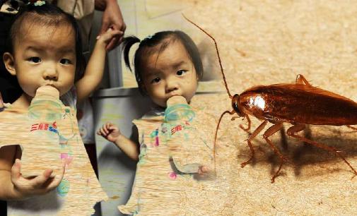 Leche de cucaracha: ¿el alimento del futuro?