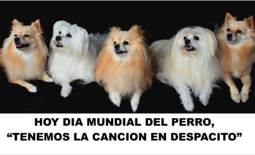 """Hoy dia mundial del perro, """"tenemos la cancion en Despacito"""""""