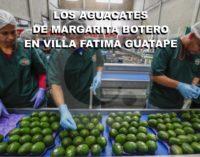 Los  aguacates Hass, de Margarita Botero en Villa Fatima Guarne.
