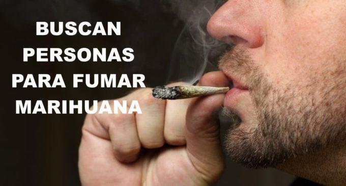 Empresa busca personas para que fumen marihuana (y les pagará muy bien)