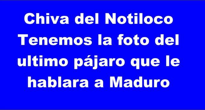 Urgente chiva del Notiloco de Botero tenemos la foto del ultimo pájaro que le hablara a Maduro