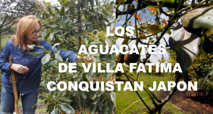 Margarita Botero hace maletas para conquistar el Lejano Oriente, con  aguacates Hass,  va  a Japon con los aguacates de Villa Fatima.