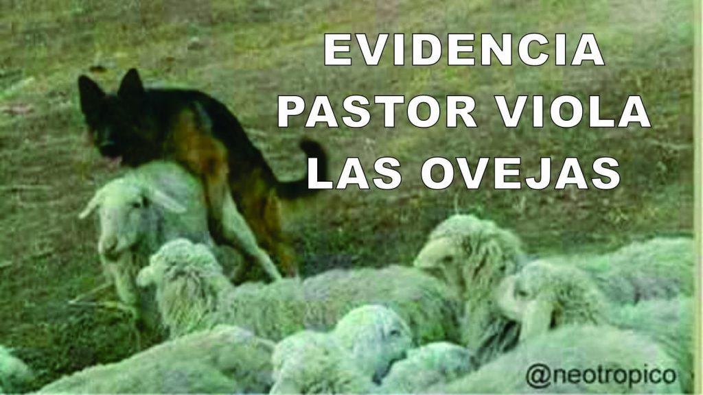 pastor viola